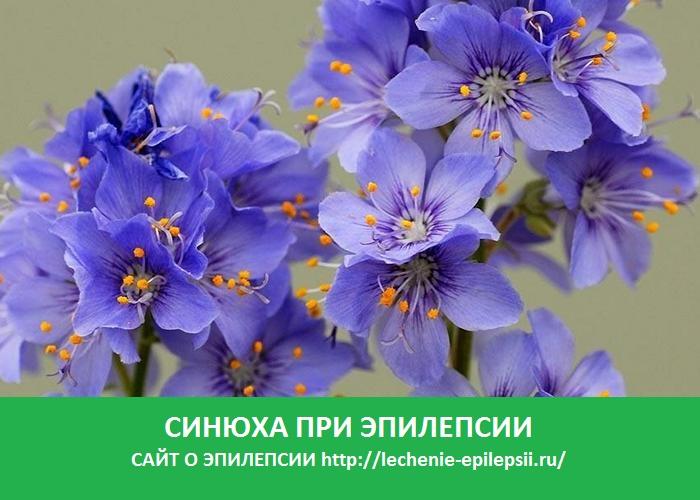 Синюха при эпилепсии